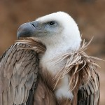 Eco-imperialism Joins Vulture Environmentalism