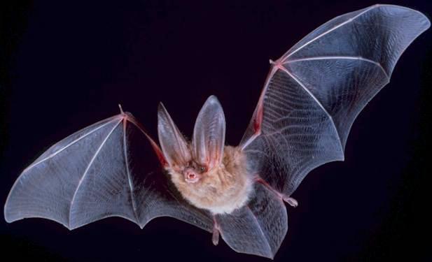 Cut Fingers, Cancer, Bats and Birds