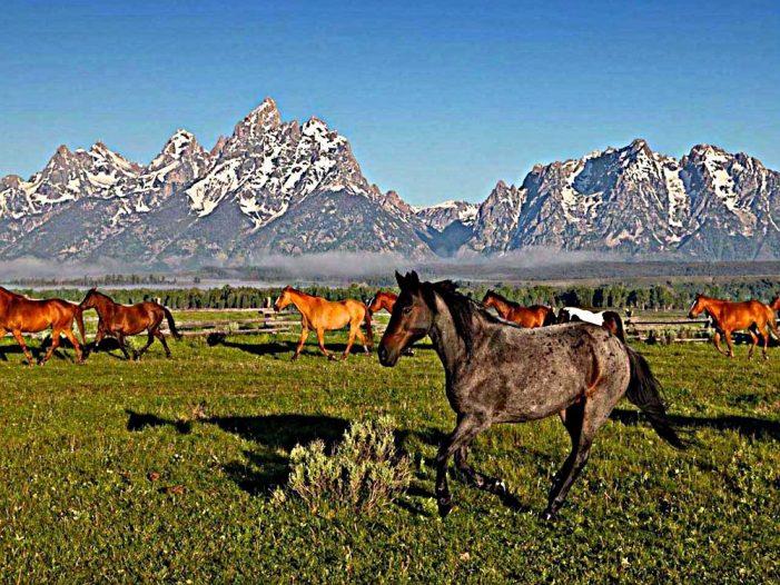 Rural America In The Crosshairs!