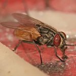 One-Act Play: The Fly on the Wall