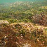 Killing Marine Life With Ethanol