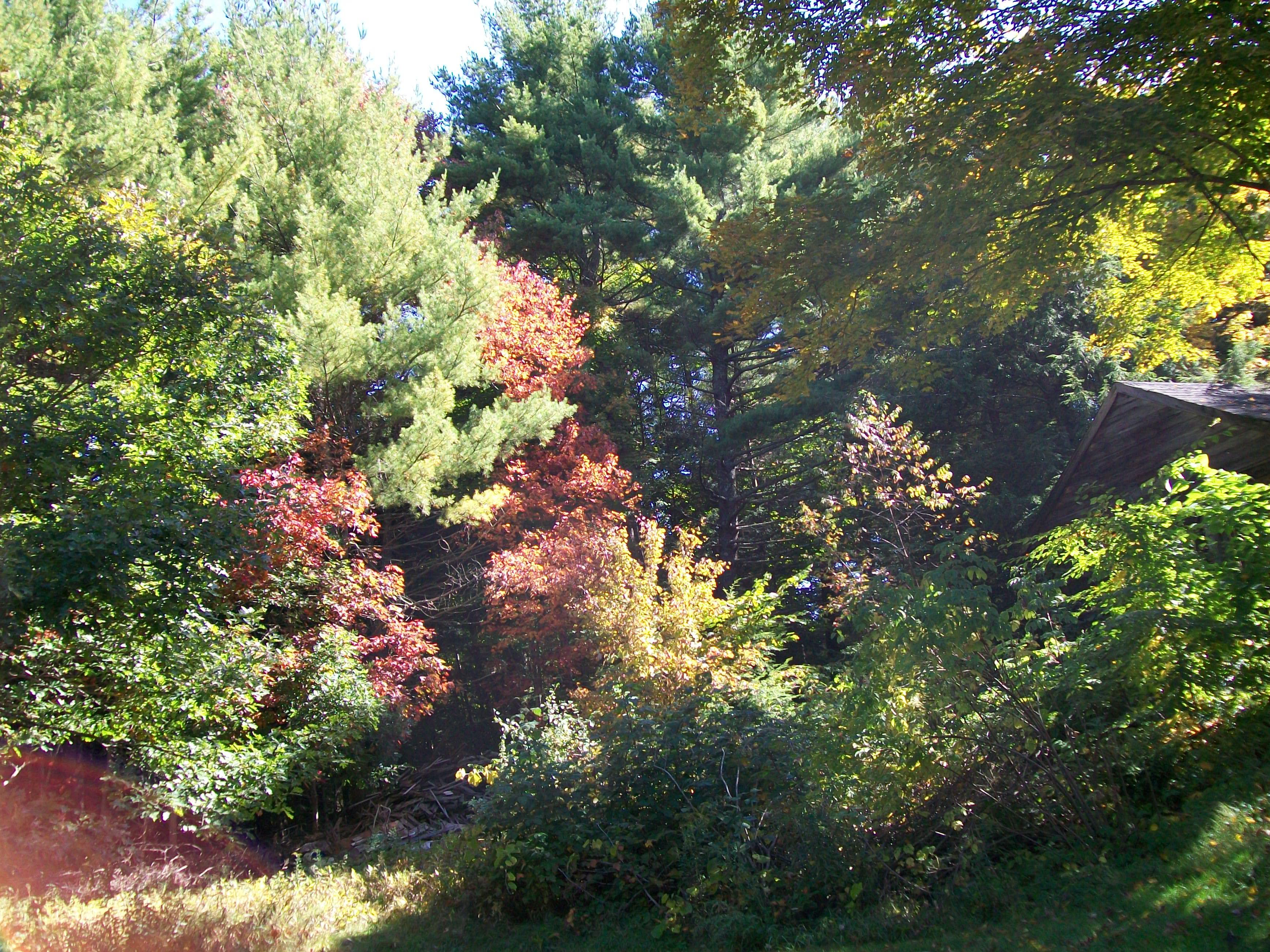 Autumn Colors 16