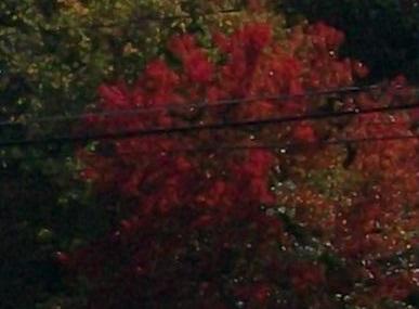 Autumn Colors 17