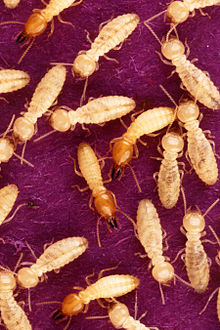 We Are Not a Colony of Termites