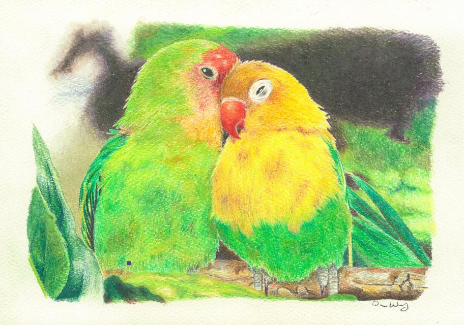 Darren Huff Parrots