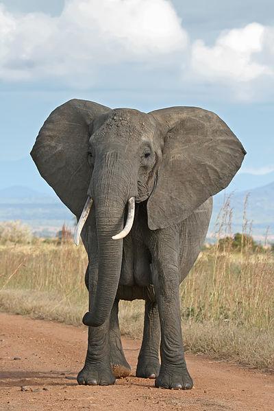 Eleanor, the Talking Elephant (RR)