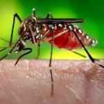 We Don't Need Billion$ to Prevent Zika