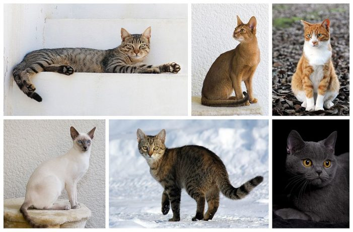 The Egyptians Mummified Cats (RR)