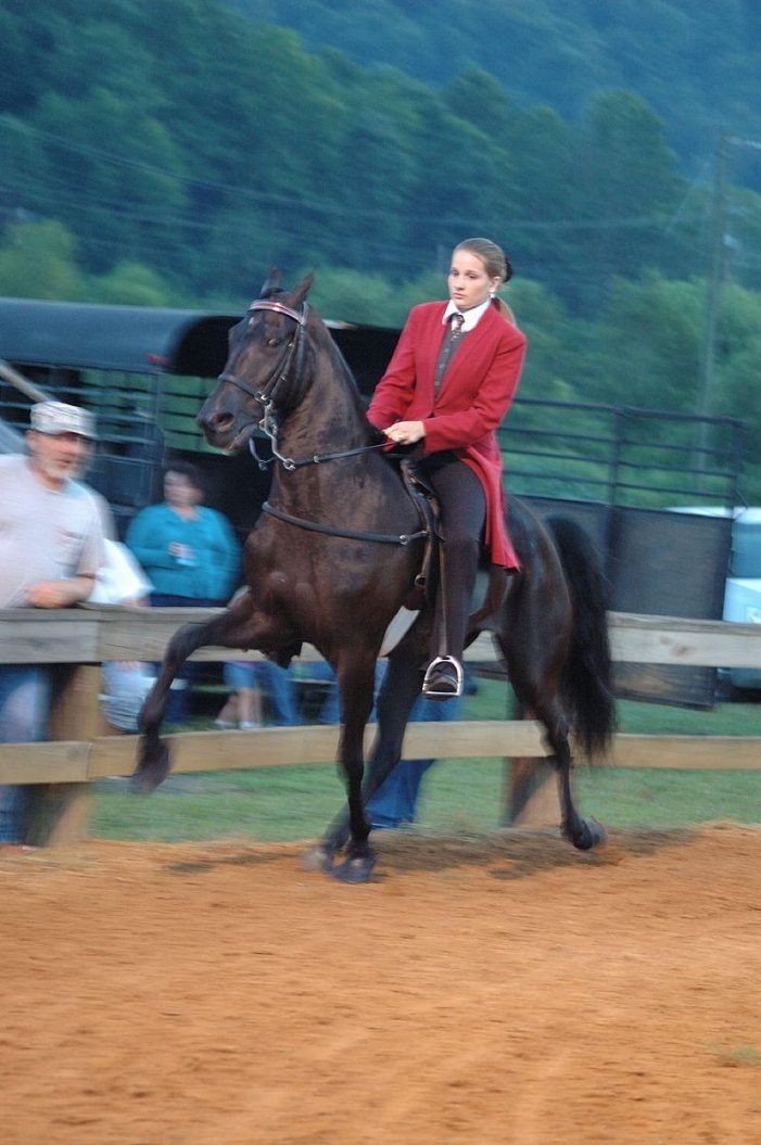Citizen Action Group Works to Abolish Cruelty to Tennessee Walking Horses