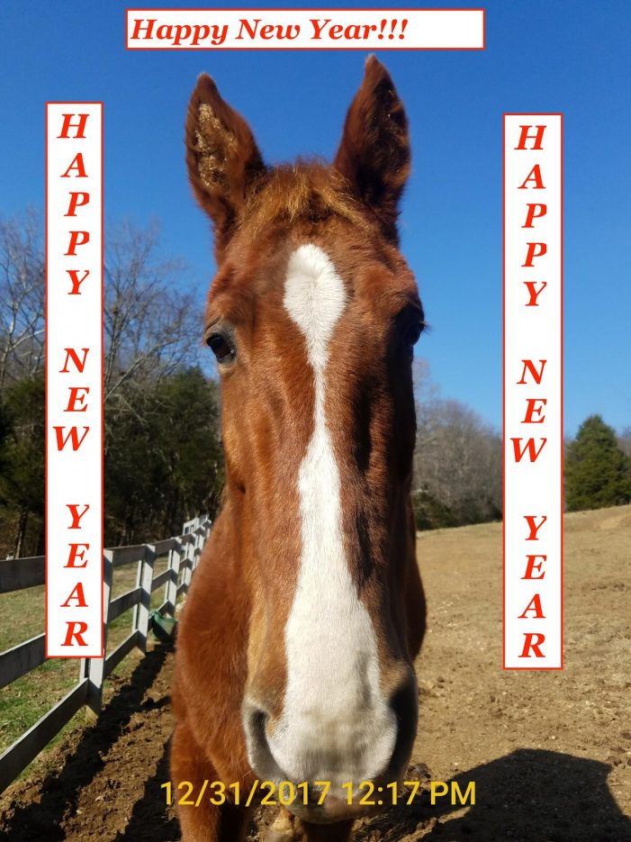 """Report:  """"Big Lick"""" Horse Show to Disappear from Panama City Beach, FL"""