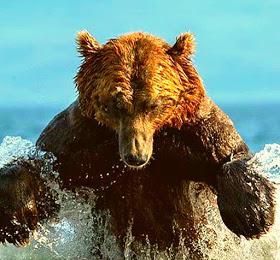 Bear Prepare