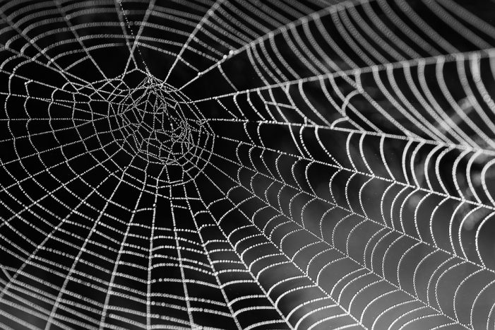 "Bloom Energy's ""Tangled Web"""