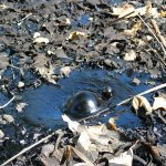 The New California Tar Pit