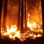 Extreme Wildfires Caused by Extreme Stupidity, not Global Warming