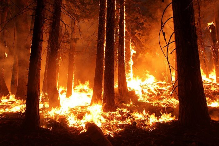 Man-made Wildfires – Another Green Disaster I