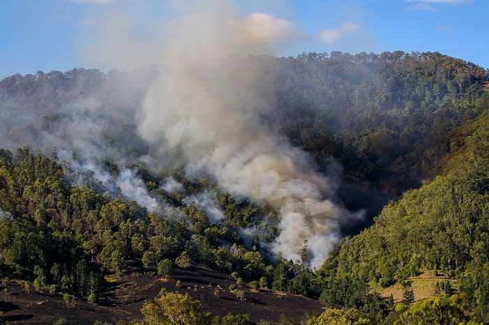 Bushfire Sense and Nonsense