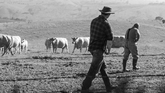 Only Dramatic, Direct Action Will Save the American Beef Industry