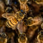 Ban Neonics – Hurt Farmers and Bees