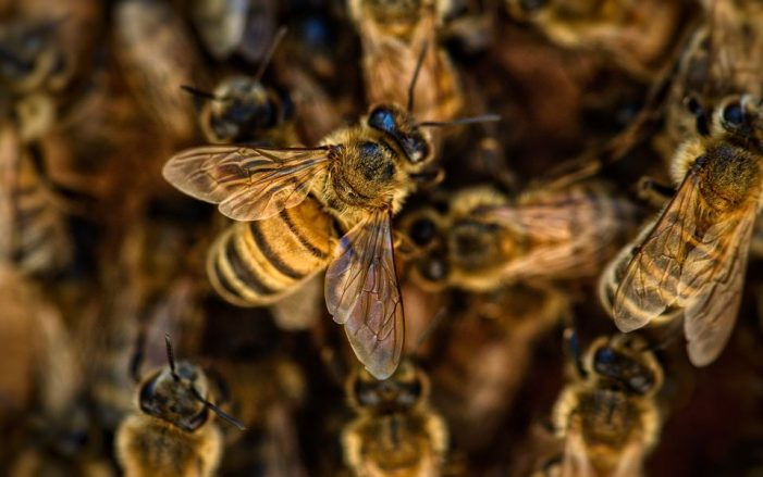 Ban Neonics – Hurt Farmers and Bees