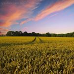 Food Security in a Post-Covid World
