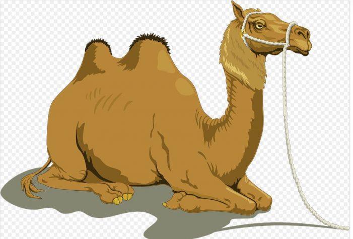 Po-Tay-Toe, Po-Tah-Toe; Camel-Uh, Comma-Luh