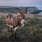 Biden and Muslim Democrats Join the Braying Donkeys!